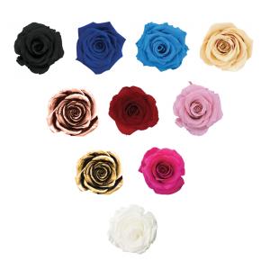 Roses Care - Oh Lá Lá Roses